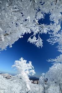 真っ白な山木梶山~国見山 - 峰さんの山あるき
