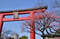 亀戸天神社の梅 - kenのデジカメライフ