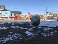 雪の名残 - 現場のことは俺に聞け!~東村山市 相羽建設の現場ブログ~