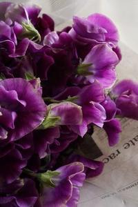 フラワーヴァレンタイン - お花に囲まれて