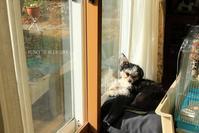 B.B & Chipo* 窓辺のフタリ^^ - FUNKY'S BLUE SKY