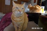 またまたロンのオシッコ掛けにやられました - 猫と自然と散歩の日々