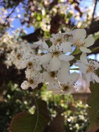 我が家の裏庭にも春の訪れ - アバウトな情報科学博士のアメリカ