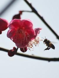 蜂も少しずつ - いや、だから 姉ちゃん じゃなくて ネイチャー・・・