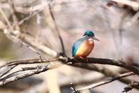 2月の野鳥(№2) - 何でも写真館