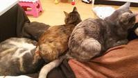 幸せの重み - 猫に目薬
