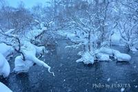 厳冬の裏磐梯にて1 - Photo Gallery 福田