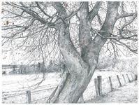 真っ白な霜景色 Hard Frost - ブルーベルの森-ブログ-英国のハンドメイド陶器と雑貨の通販