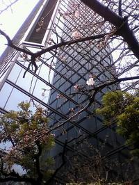 春を探す - モデラートカンタービレ 大阪 著作 書籍販売 タロット 裏数秘術 カラールネーション