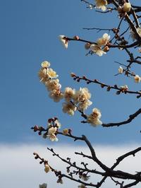 早春の鎌倉浄妙寺を訪れました。(撮影:2月10日) - ご無沙汰写真館
