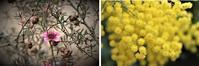 百合が原公園の花たち第二弾 - ワイン好きの料理おたく 雑記帳