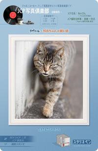 野良猫の目 - 39medaka