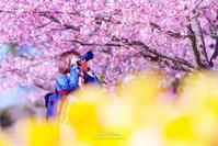 ☆ 春を撮る ☆ - Trimming
