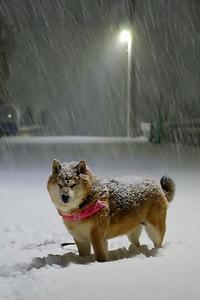 午前3時のしんしんと降る大雪 - 写心食堂