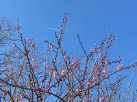 """春〜だ❗️(^_^*) - 西薗守の""""子育て"""""""