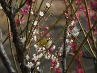 春を待つコーデ - おしゃれを巡る冒険