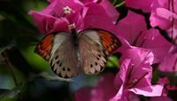 奈良 橿原昆虫館 - 紀州里山の蝶たち
