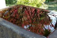 梅を求めて~片瀬江の島、常立寺 - カマクラ ときどき イタリア