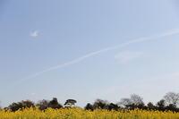 春色の風 - ecocoro日和