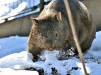 モモコと雪の庭 - bonsoir