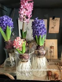 ヒヤシンス開花とオーダー作品 - おうち、くらし、わたしのすきなもの。