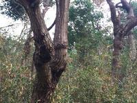里山や平野部の雑木林でのオオクワを求めて 15年振りに○○地域の里山ポイントへ…   part2 - Kuwashinブログ