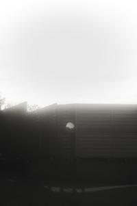 朝の散歩(4cut) -     ~風に乗って~    Present