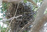 カラスの巣など - そらいろのパレット