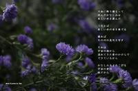 証 - 陽だまりの詩