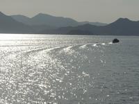 瀬戸内海に浮かぶ離島、大崎上島の「すみれ祭り」に行ってきた。 - 大朝=水のふる里から