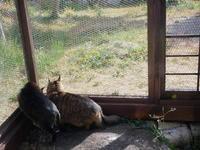 十人十色、十猫十色 - ご機嫌元氣 猫の森公式ブログ