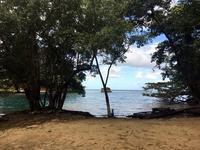 ブルーラグーンの畔で - ジャマイカブログ Ricoのスケッチ・ダイアリ