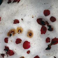 サザンカの紅が散る散歩道 - Yoshi-A の写真の楽しみ