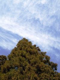 気温氷点下1℃で晴れの朝に・・・今年は杉花粉の飛散多し  朽木小川・気象台より - 朽木小川・気象台より、高島市・針畑郷・くつきの季節便りを!
