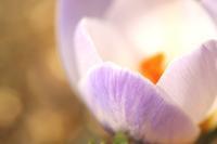 春はもうすぐ♪ - 湘南気まま生活♪