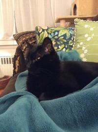 ネコ : 悩み中 - にゃんこと暮らす・アメリカ・アパート(その2)