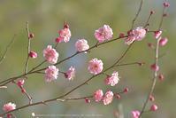 お花がいっぱい咲いたらね - お花びより