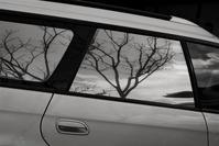 reflection - フォトな日々