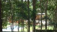 ある日突然視界が開ける!?(我が家周辺の出来事) - ハチドリのブラジル・サンパウロ(時々日本)日記