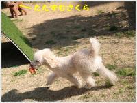 小春日和の1日、久しぶりにロング散歩で運動できたね~ - さくらおばちゃんの趣味悠遊