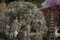 2.17 常立寺 - 週末はソニーα6500でぶらり鎌倉・湘南散歩!
