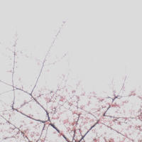 "p839 "" 春在一枝中 ""松の川緑道2018年2月21日 - 侘び寂び"