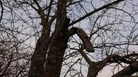 今朝の散歩 - 優駿、大樹の下で和を奏でる~平屋暮らし*時々handmade~