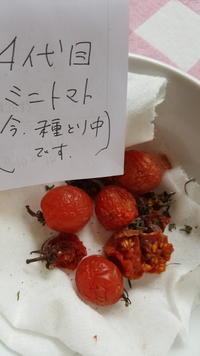腐らない野菜 - 鎌倉fonteの日常