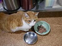 ちぃちぃの贈り物 - ご機嫌元氣 猫の森公式ブログ