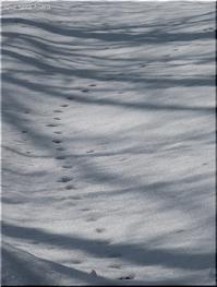 白い雪 🐾 青い空 - Que Sera *Sera