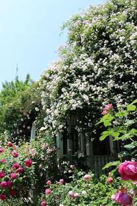 NHK文化センター横浜ランドマーク教室「もっと素敵にバラのある暮らし」ご参加者様募集 - 元木はるみのバラとハーブのある暮らし・Salon de Roses