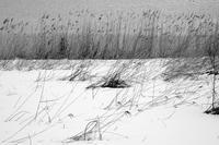 春待ち鳥屋野潟 - Yoshi-A の写真の楽しみ