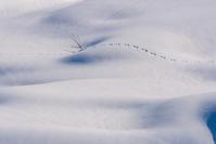 雪国 - デジカメ写真集