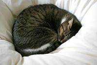 猫の日 - サバとタラ